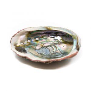 Abalone-Muschel- Groß - 90 bis 100 mm